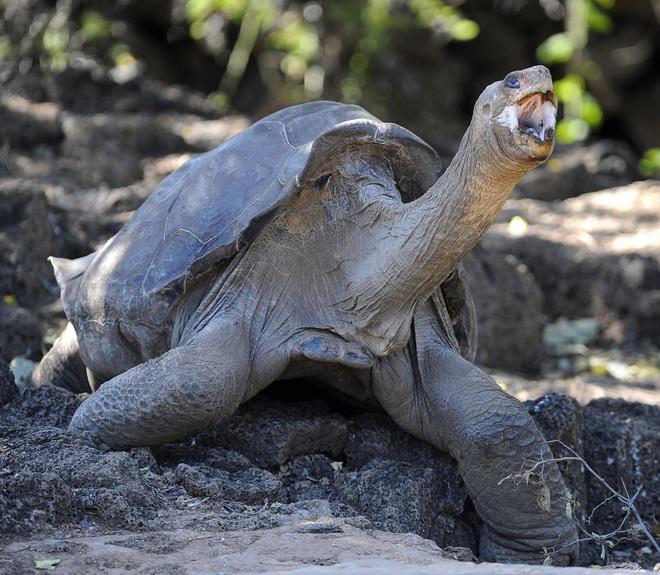Đây là danh sách toàn bộ 160 loài sinh vật đã tuyệt chủng trong thập niên 2010 - Ảnh 1.