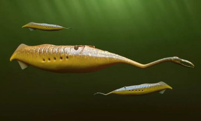 Loài sinh vật cổ đại có hình dáng chẳng giống ai khiến các nhà khoa học tranh cãi 60 năm mà vẫn chưa có kết quả - Ảnh 1.
