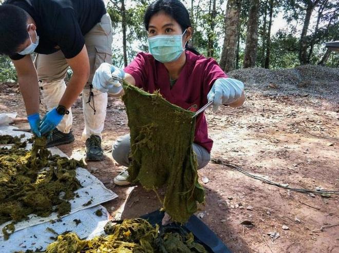 Vấn nạn rác thải nhựa ngày càng nhức nhối: Một con nai vừa chết chỉ vì ăn phải 7kg nhựa - Ảnh 2.