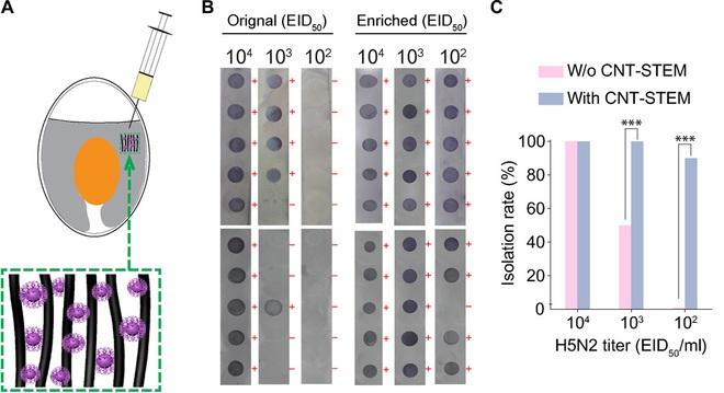 Các nhà khoa học phát minh ra chiếc rọ nano có thể bắt virus và xác định chủng của nó trong vài phút - Ảnh 3.