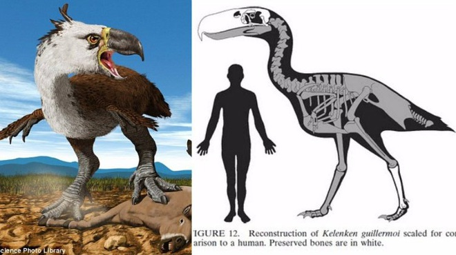 Loài người thật may mắn vì những loài chim ăn thịt khổng lồ này đã tuyệt chủng - Ảnh 7.
