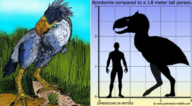 Loài người thật may mắn vì những loài chim ăn thịt khổng lồ này đã tuyệt chủng - Ảnh 8.