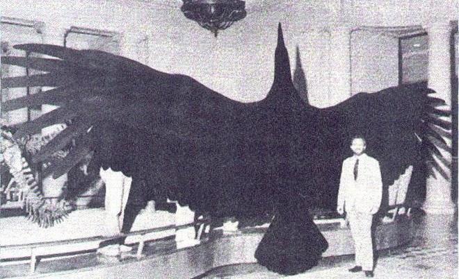 Loài người thật may mắn vì những loài chim ăn thịt khổng lồ này đã tuyệt chủng - Ảnh 3.