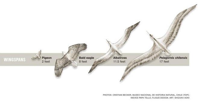 Loài người thật may mắn vì những loài chim ăn thịt khổng lồ này đã tuyệt chủng - Ảnh 4.