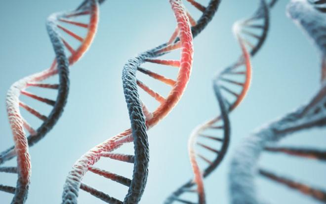Tuổi thọ của các loài động vật được định sẵn trong DNA, và loài người chỉ thọ 38 năm mà thôi - Ảnh 1.