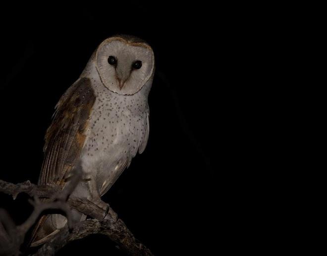 Đẳng cấp săn mồi của chim lợn: Phản chiếu ánh trăng dọa con mồi khiếp vía đến mức không dám di chuyển, đành đứng im chờ chết - Ảnh 2.