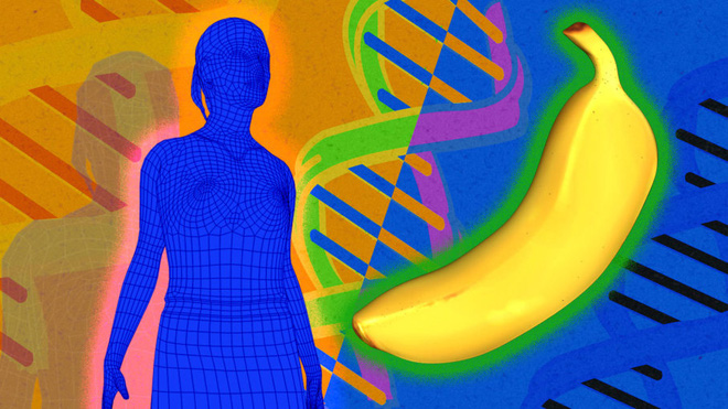 Nghiên cứu khoa học: Con người và chuối là họ hàng thân thiết, ADN giống nhau đến 50%? - Ảnh 3.