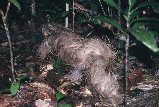 Các nhà khoa học phát hiện con lười lẻn vào nhà vệ sinh của mình, điều chúng làm thật kinh khủng - Ảnh 2.