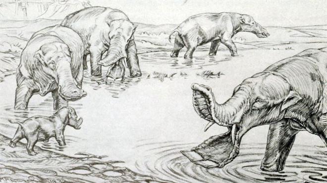 Vì sao mũi của loài voi lại tiến hóa để dài như vậy? - Ảnh 5.