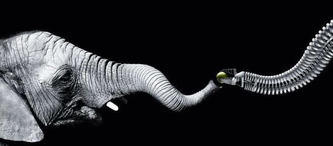 Vì sao mũi của loài voi lại tiến hóa để dài như vậy? - Ảnh 9.