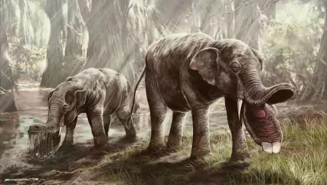 Vì sao mũi của loài voi lại tiến hóa để dài như vậy? - Ảnh 6.