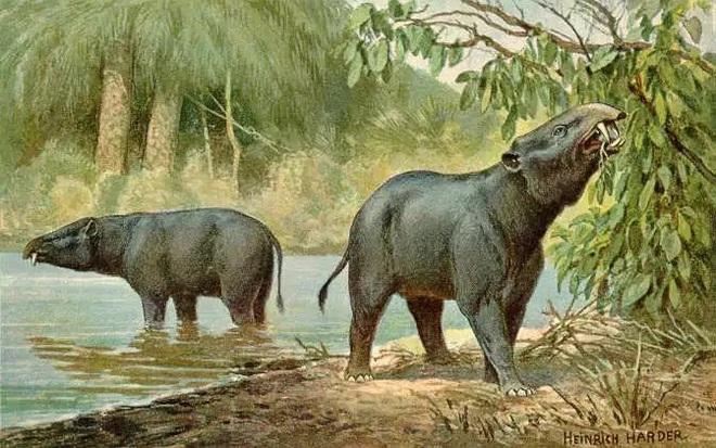 Vì sao mũi của loài voi lại tiến hóa để dài như vậy? - Ảnh 2.
