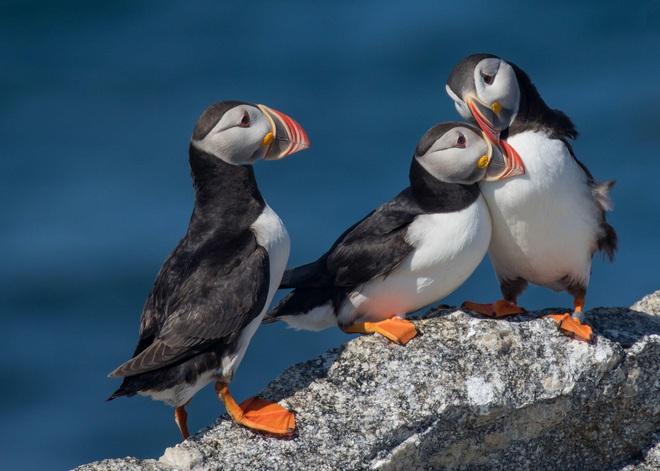 Giới khoa học bất ngờ trước video chim biết dùng công cụ: một con hải âu dùng que để gãi ngứa - Ảnh 4.