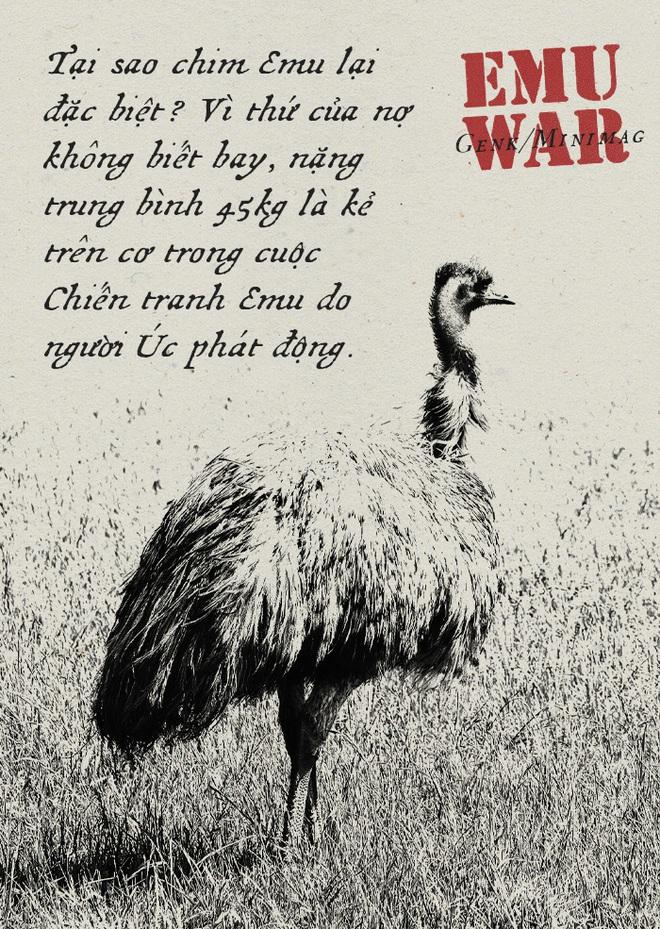 Chiến tranh Emu: thảm bại của quân đội Úc khi cố gắng đối đầu với những con chim vô cùng kỳ lạ - Ảnh 1.