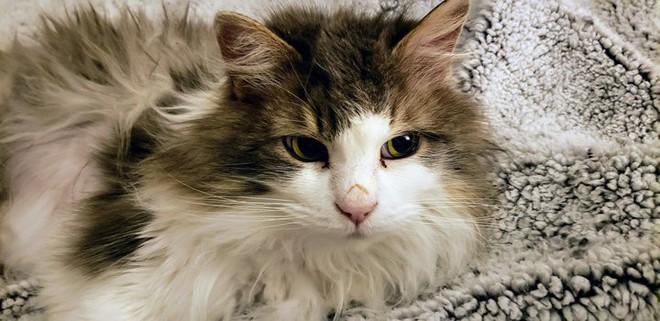Một con mèo Mỹ hồi sinh sau khi chết cóng ngoài thời tiết dưới 0 độ - Ảnh 4.