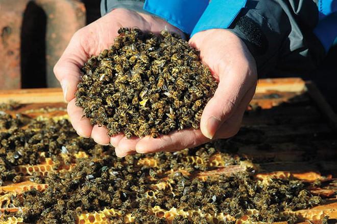 Lượng côn trùng trên thế giới đang suy giảm với tốc độ kỷ lục, gây ảnh hưởng tiêu cực đến môi trường toàn cầu - Ảnh 2.