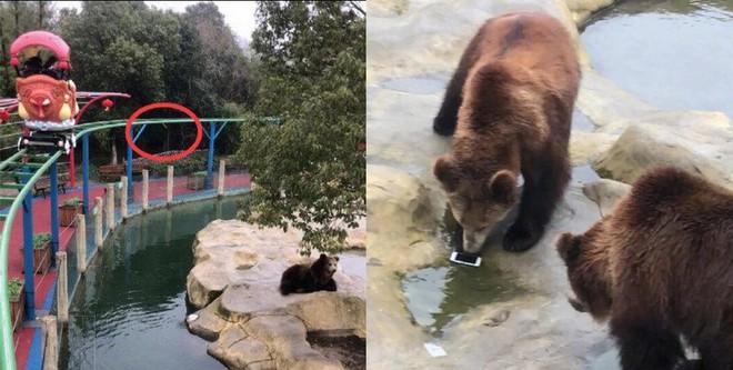 Trung Quốc: Toan ném táo cho gấu ăn, nữ du khách lại ném nhầm iPhone - Ảnh 2.