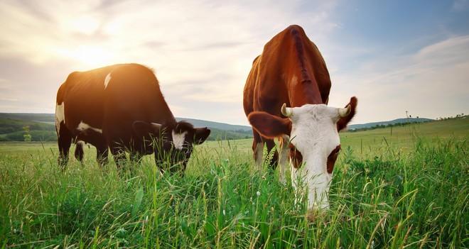 Thượng Đế đã giấu định luật thứ hai nhiệt động lực học vào thế giới động vật như thế nào? - Ảnh 6.