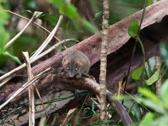 Đây là loài động vật đầu tiên tuyệt chủng vì biến đổi khí hậu do con người - Ảnh 1.