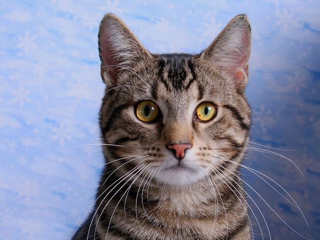 Loài mèo đã lợi dụng con người để xâm chiếm thế giới như thế nào? - Ảnh 1.