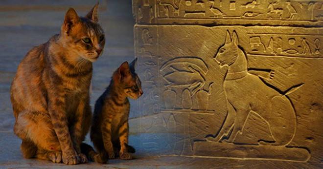 Loài mèo đã lợi dụng con người để xâm chiếm thế giới như thế nào? - Ảnh 3.