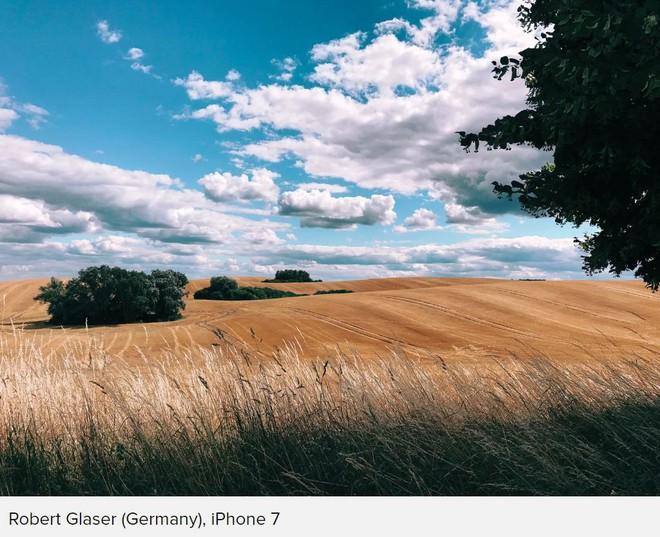 Những bức ảnh chiến thắng cuộc thi 'Shot on iPhone' cho ta thấy sự sáng tạo luôn có giá trị hơn thiết bị chụp hình - Ảnh 11.