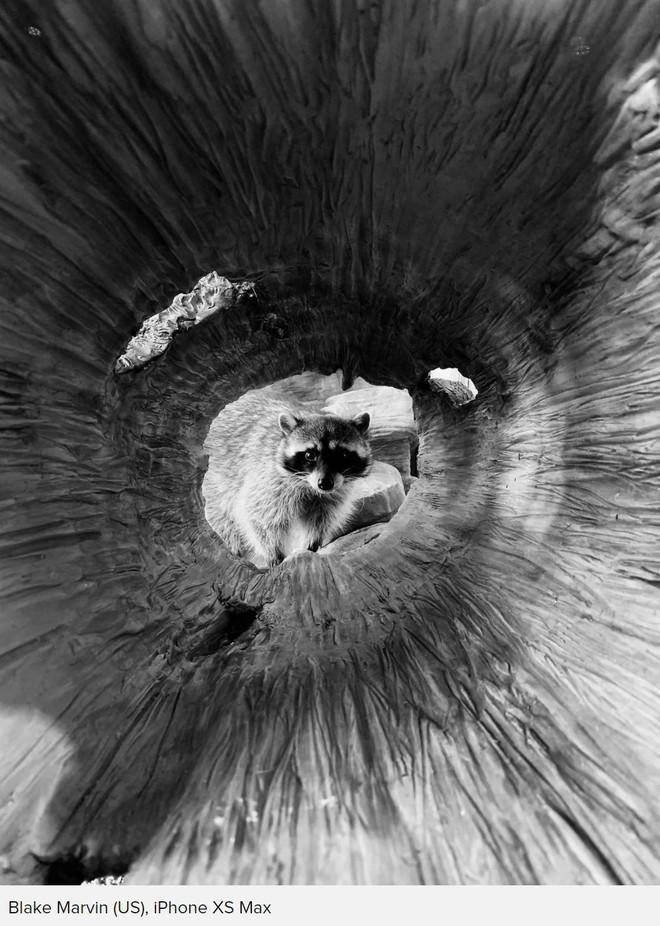 Những bức ảnh chiến thắng cuộc thi 'Shot on iPhone' cho ta thấy sự sáng tạo luôn có giá trị hơn thiết bị chụp hình - Ảnh 3.