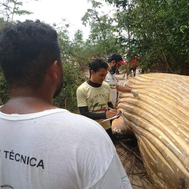 Xác cá voi dài 8m được phát hiện giữa rừng rậm Amazon khiến dân tình ngáo ngơ chẳng hiểu gì - Ảnh 2.