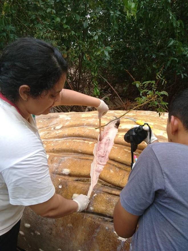 Xác cá voi dài 8m được phát hiện giữa rừng rậm Amazon khiến dân tình ngáo ngơ chẳng hiểu gì - Ảnh 4.