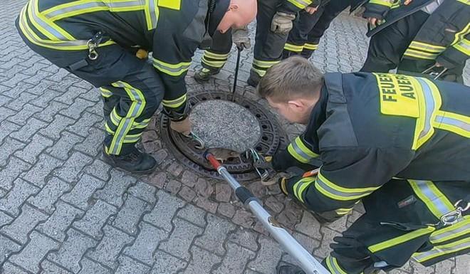 Đức: Chuột béo đến nỗi mắc kẹt ở nắp cống, 7 lính cứu hỏa phải toát mồ hôi mới cứu được - Ảnh 5.