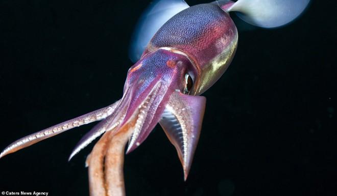 Những sinh vật biển phát sáng tuyệt đẹp của đáy Thái Bình Dương sẽ khiến bạn mê mẩn - Ảnh 8.