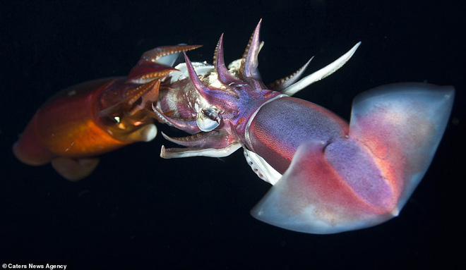Những sinh vật biển phát sáng tuyệt đẹp của đáy Thái Bình Dương sẽ khiến bạn mê mẩn - Ảnh 10.