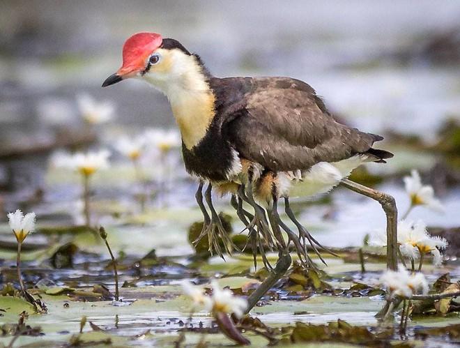 Tưởng bị nhiễm phóng xạ mọc ra 10 chân, sự thật về con chim kỳ lạ lại khiến Internet cảm phục - Ảnh 3.