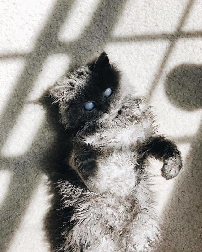Chú mèo với đôi mắt trắng bệch như phủ thủy làm phép khiến internet náo loạn - Ảnh 3.