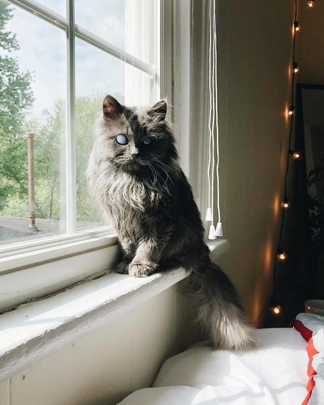 Chú mèo với đôi mắt trắng bệch như phủ thủy làm phép khiến internet náo loạn - Ảnh 8.