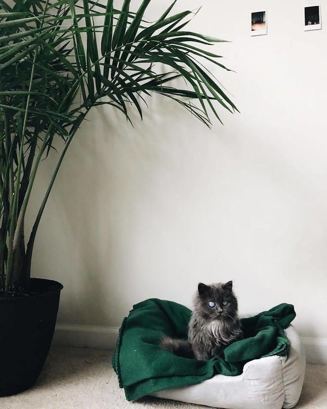 Chú mèo với đôi mắt trắng bệch như phủ thủy làm phép khiến internet náo loạn - Ảnh 11.
