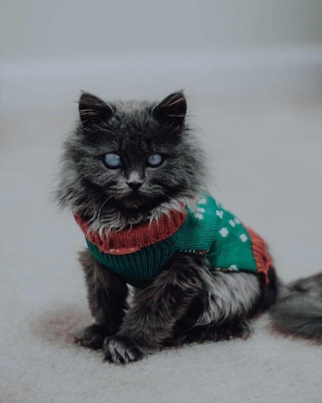 Chú mèo với đôi mắt trắng bệch như phủ thủy làm phép khiến internet náo loạn - Ảnh 10.
