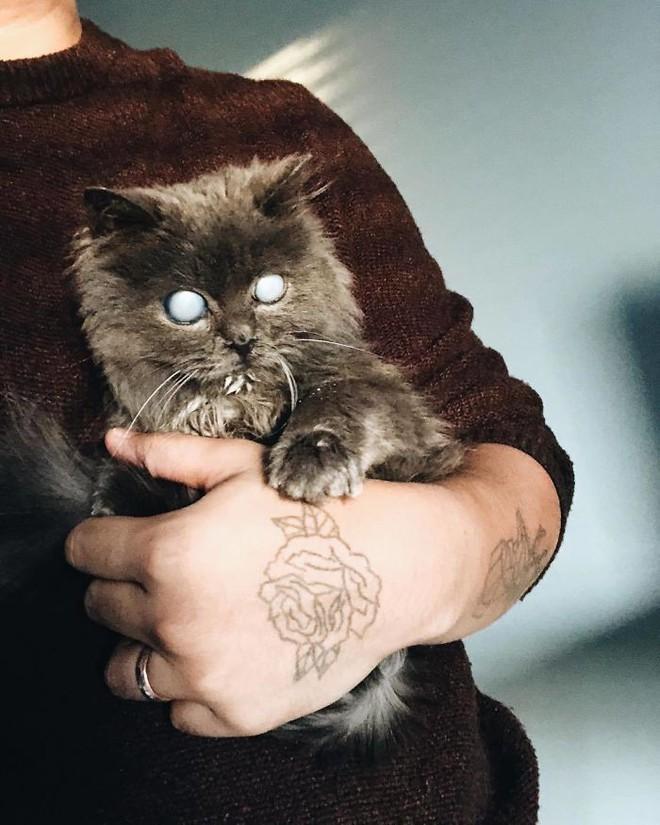 Chú mèo với đôi mắt trắng bệch như phủ thủy làm phép khiến internet náo loạn - Ảnh 14.