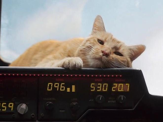 Đây, tất tần tật những gì cần biết về Goose - chú mèo siêu hot trong Captain Marvel - Ảnh 1.