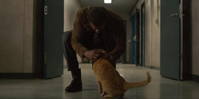 Đây, tất tần tật những gì cần biết về Goose - chú mèo siêu hot trong Captain Marvel - Ảnh 2.