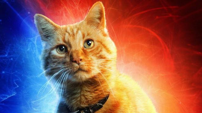 Đây, tất tần tật những gì cần biết về Goose - chú mèo siêu hot trong Captain Marvel - Ảnh 10.