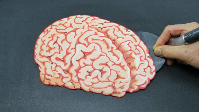 Não bạn nặng bao nhiêu kg? Đâu là những loài vật có não nhỏ nhất và lớn nhất? - Ảnh 1.