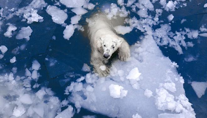 Tin chính thức: Chúng ta không thể làm gì để ngăn nhiệt độ Bắc Cực tăng - Ảnh 3.