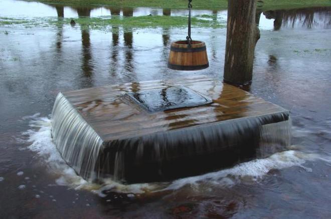Sau mỗi trận mưa, cây ở làng này lại biến thành đài phun nước. Tại sao lại thế? - Ảnh 3.