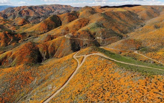 Xót xa đồi hoa California khổng lồ cực hiếm bị phá hoại chỉ vì làn sóng Instagram thích sống ảo - Ảnh 2.