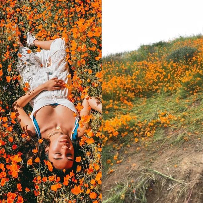 Xót xa đồi hoa California khổng lồ cực hiếm bị phá hoại chỉ vì làn sóng Instagram thích sống ảo - Ảnh 3.