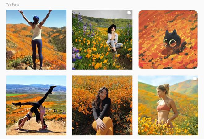 Xót xa đồi hoa California khổng lồ cực hiếm bị phá hoại chỉ vì làn sóng Instagram thích sống ảo - Ảnh 8.