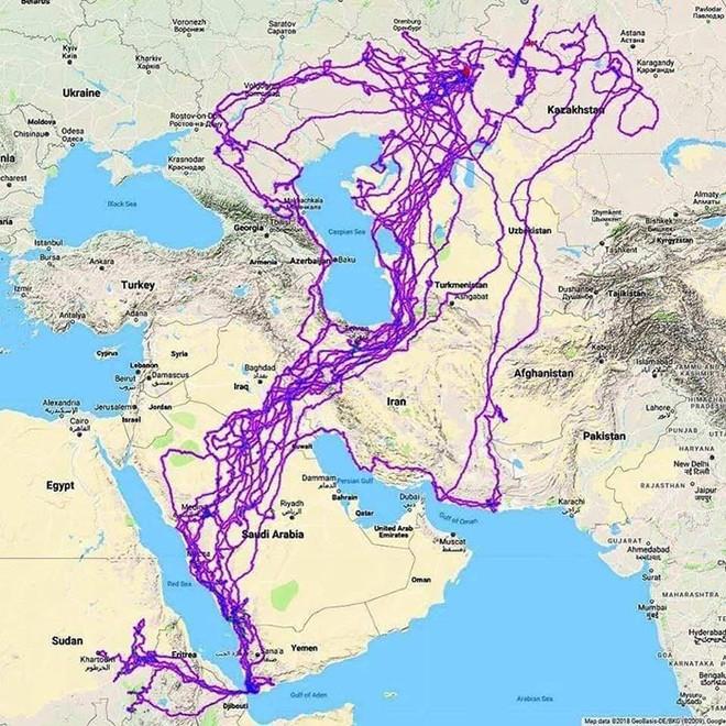 Con đại bàng với thiết bị GPS cho thấy hành trình ngàn dặm của nó sau 20 năm đáng nể như thế nào - Ảnh 3.