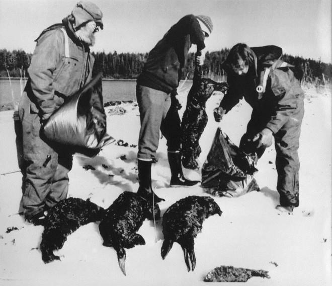 Sau 30 năm, những bức ảnh từ thảm họa tràn dầu Exxon Valdez vẫn còn gây ám ảnh - Ảnh 13.