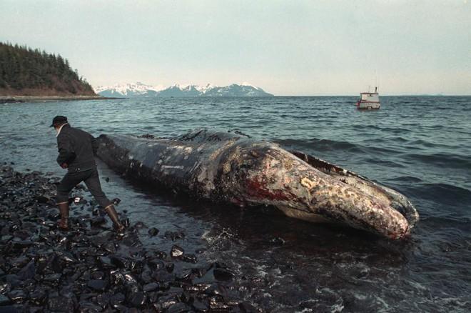 Sau 30 năm, những bức ảnh từ thảm họa tràn dầu Exxon Valdez vẫn còn gây ám ảnh - Ảnh 7.